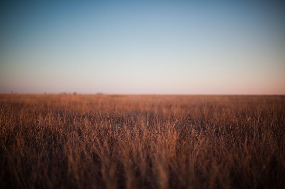 Texas-grass